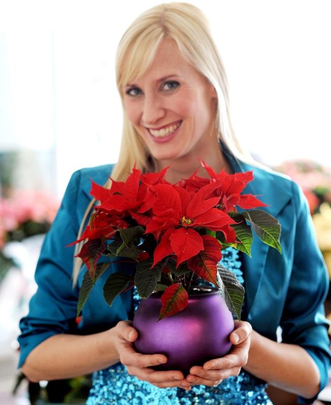 Winterliches Farben-Wunder: Die neue Weihnachtsstern-Saison hat begonnen