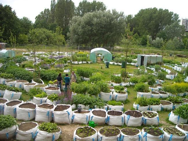 urban gardening findet immer mehr anh nger gawina. Black Bedroom Furniture Sets. Home Design Ideas