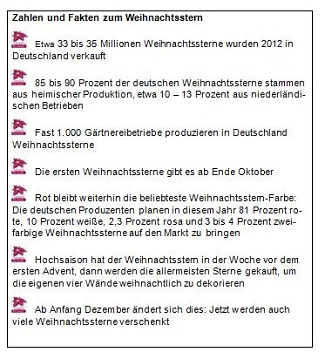 Weihnachtssterne Infokasten_SFE_Sasisoneröffnung