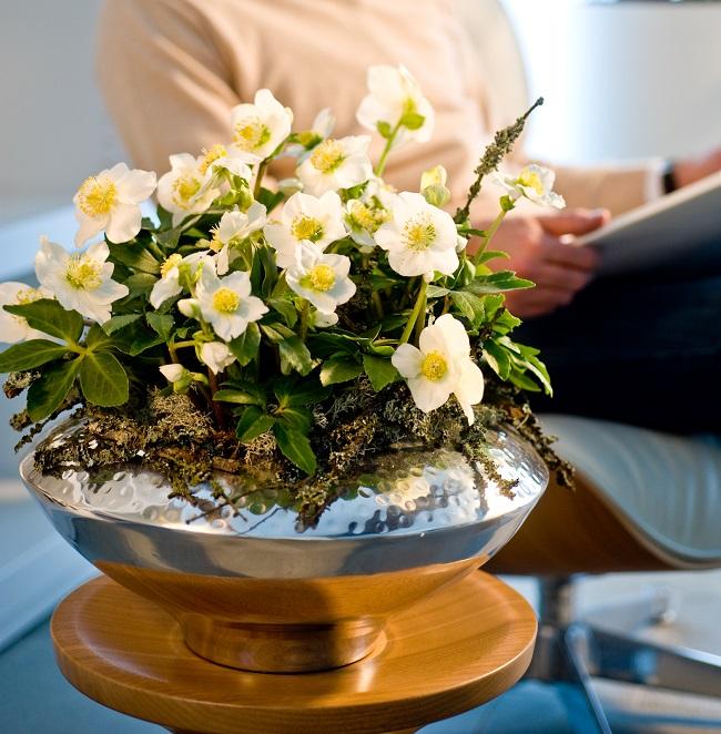 winterbl her f r haus und garten heben die stimmung gawina bl hende pflanzen bl hpflanzen. Black Bedroom Furniture Sets. Home Design Ideas