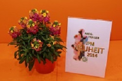 IPM 2014 2 erysimum_hybride_winter_party_kientzler_SP03_2014