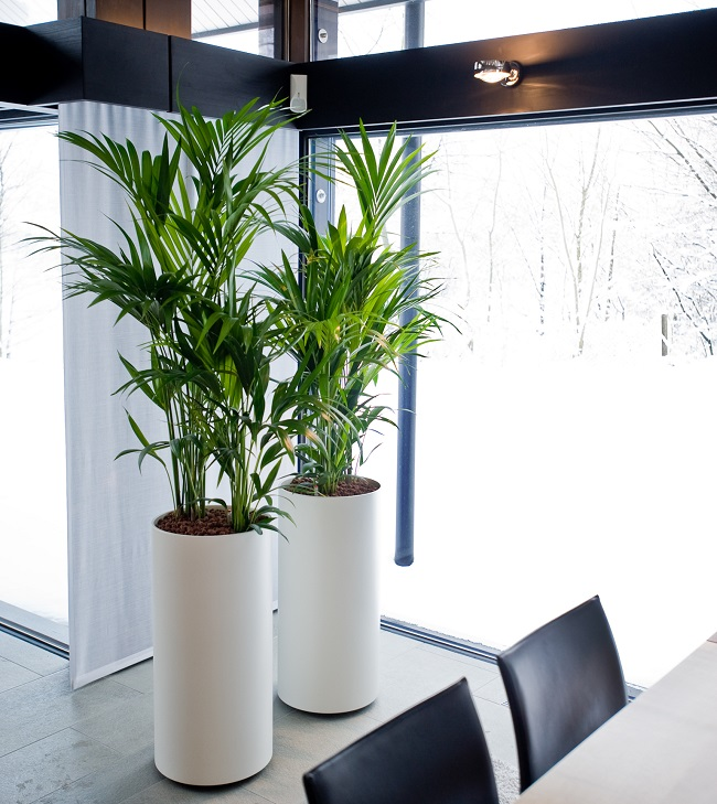 pflanzen werden zum designobjekt gawina blumen und. Black Bedroom Furniture Sets. Home Design Ideas