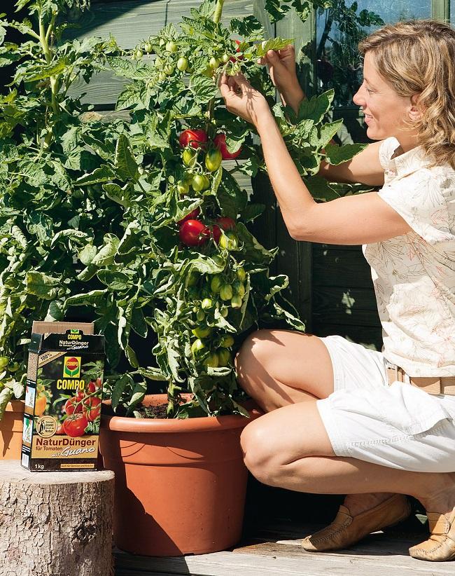 compo bio produkte f r tomaten und kr uter aus eigenem. Black Bedroom Furniture Sets. Home Design Ideas
