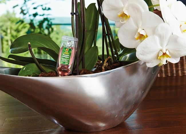 COMPO Orchideen-Aufbaukur Für Exotisches Lila › Gawina