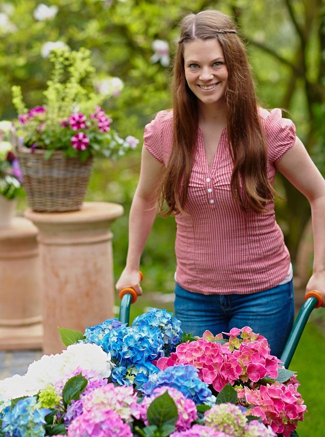 Innovative Züchter verhelfen Hortensien zu knalli-gen Farben