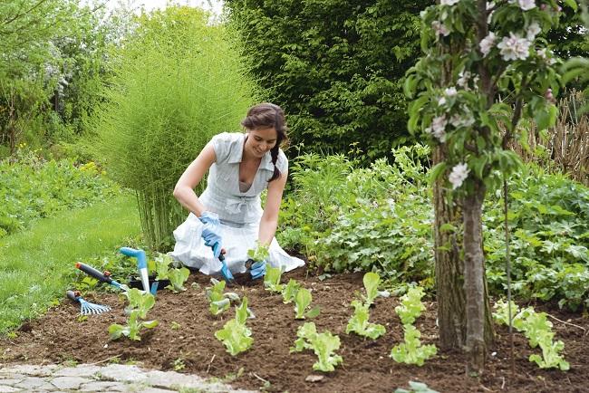gardena unkraut j ten ist unbeliebteste arbeit im garten gawina frauen pflanzen. Black Bedroom Furniture Sets. Home Design Ideas