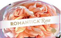 BKN Romantica Rose