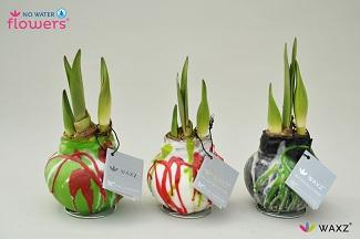 Gläserne Tulpe 2015 cp-waxz-art-groen-wit-zwart