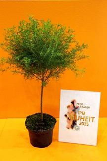 IPM_Kuebelpflanzen