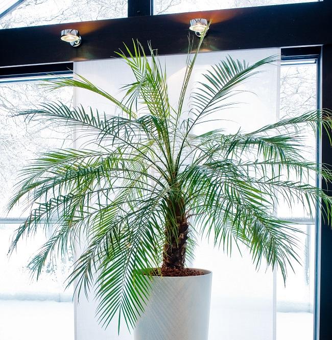 Drei Faustregeln braucht es zum Erfolg mit  Zimmerpflanzen in Hydrokultur