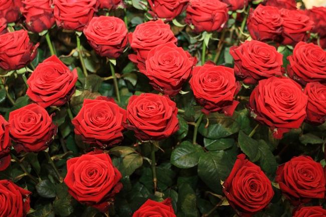 Valentinstag 2015_Rote Rosen