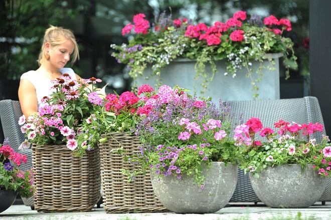 Balkonpflanzen märz  Passende Gefäße fördern die Wirkung Ihrer Balkonpflanzen › Gawina ...