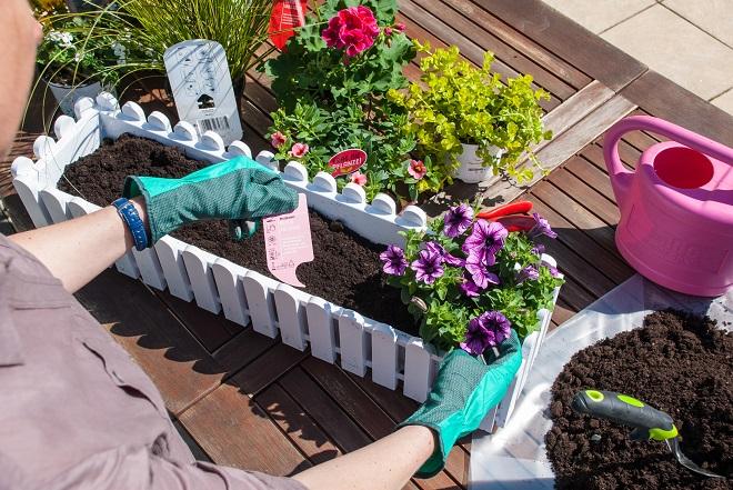 balkonk sten und k bel richtig bepflanzen gawina beet und ballkonpflanzen tipps zur. Black Bedroom Furniture Sets. Home Design Ideas