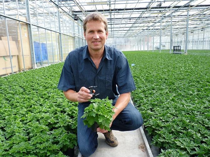 Bildunterschrift: In seinem Gewächshaus am Niederrhein setzt Zierpflanzengärtner Andreas Thoenissen auf den Einsatz von Nützlingen, um Schadinsekten von seinen Pflanzen fernzuhalten. (Bildnachweis: GMH/ M Ruisinger)