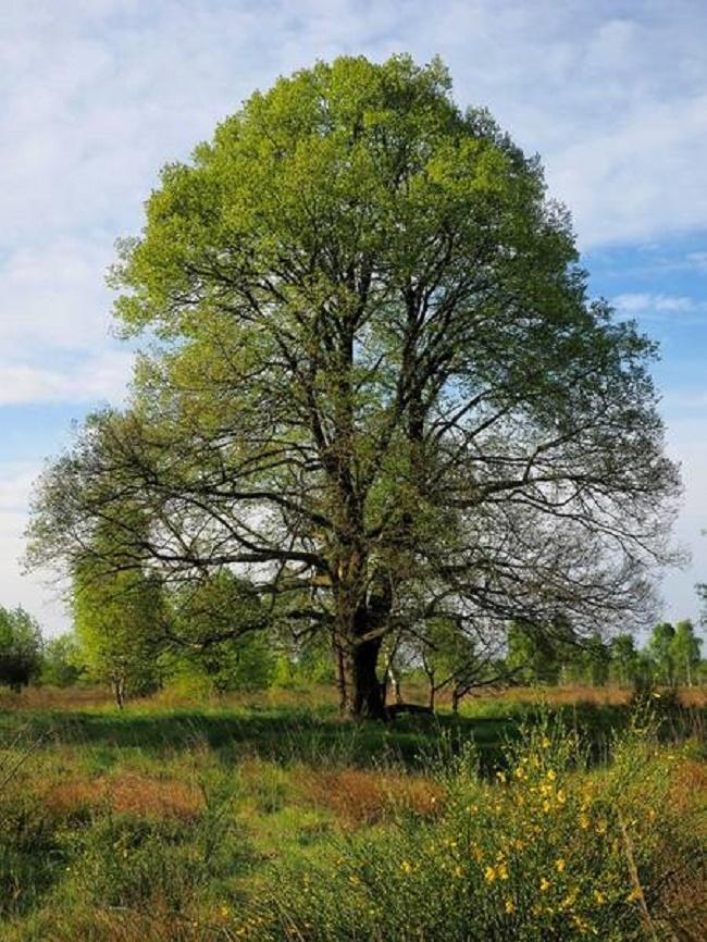 Baum des Jahres 2016