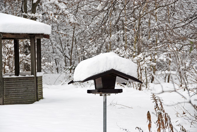 v gel richtig f ttern im winter gawina v gel im winter v gel richtig versorgen. Black Bedroom Furniture Sets. Home Design Ideas