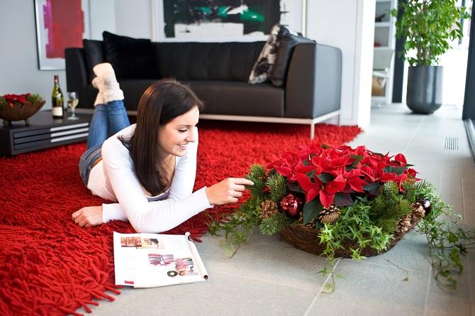 Bildunterschrift: Winterblüher wie der Weihnachtsstern bringen Farbe in die dunkle Jahreszeit, sorgen für ein festliches Ambiente und spenden Wohlbefinden und Freude. (Bildnachweis: GMH)