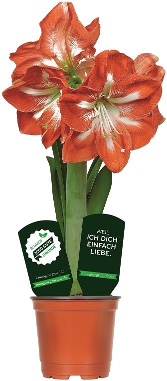 Landgard Presseinformation_Pflanzenstecker