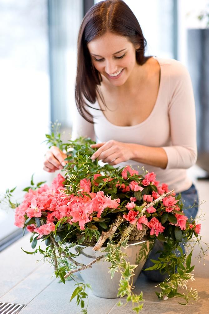 Bildunterschrift: Azaleen (Rhododendron simsii) zeigen die schönsten Blüten des Winters und lassen sich gut mit anderen Pflanzen kombieren, wie hier mit winterblühendem Jasmin (Jasminum polyanthum) und Efeu (Hedera helix). (Bildnachweis: GMH/BVE)