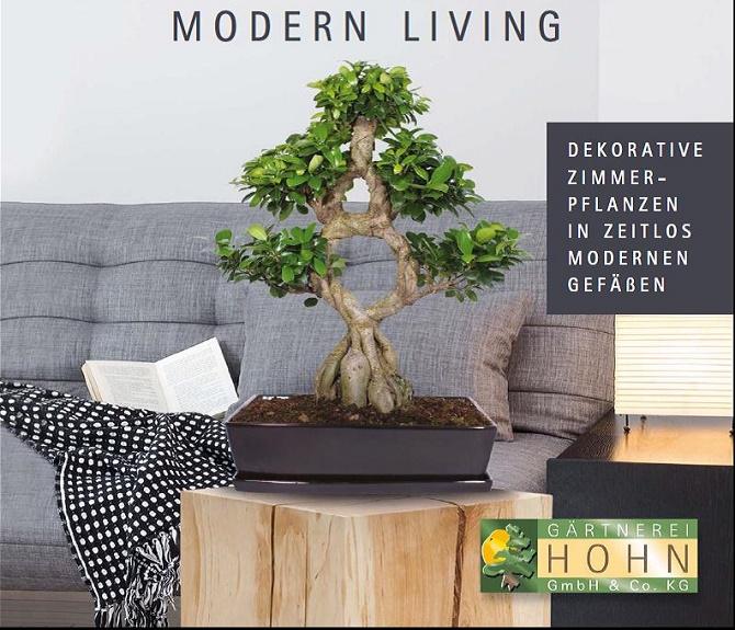 Hohn - Katalog 2016