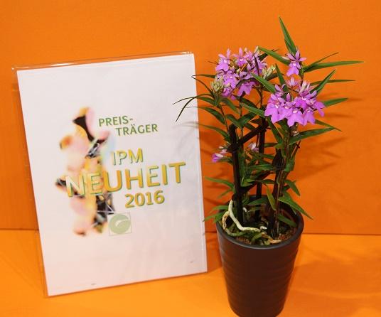 IPM_Neuheiten_bluehende Zimmerpflanze