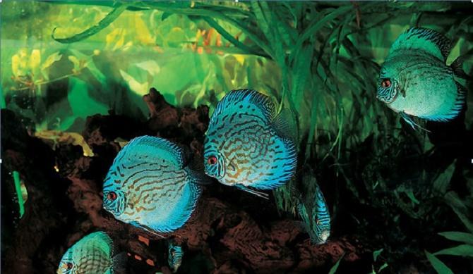 Oase- Bild mit Fischen