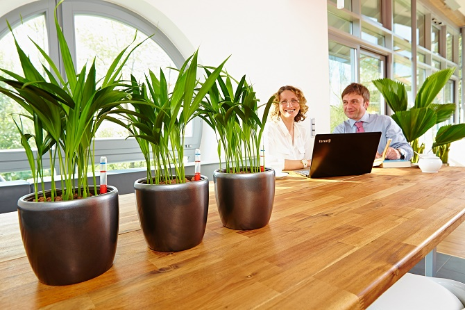 Bildunterschrift: Grünpflanzen sorgen für Atmosphäre und Wohlbefinden – nicht nur in den eigenen vier Wänden, sondern auch am Arbeitsplatz. (Bildnachweis: GMH/FvRH)