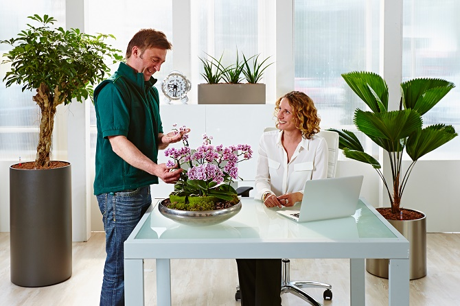 Bildunterschrift: Ob blühende Topfpflanze oder Grünpflanze im großen XXL-Gefäß – der professionelle Pflegeservice kennt sich mit jeder Pflanzenart bestens aus. (Bildnachweis: GMH/FvRH)