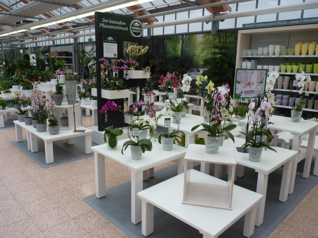 Dehner_ Wien_Orchideen