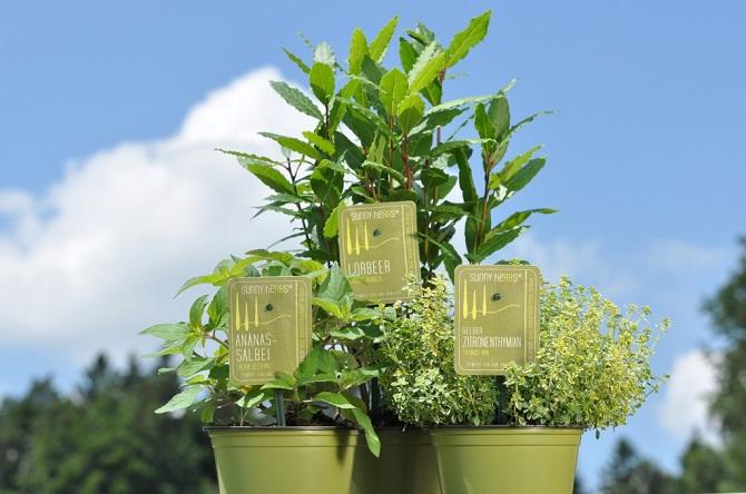 EPS_Sunny Herbs Produktbild 1024px