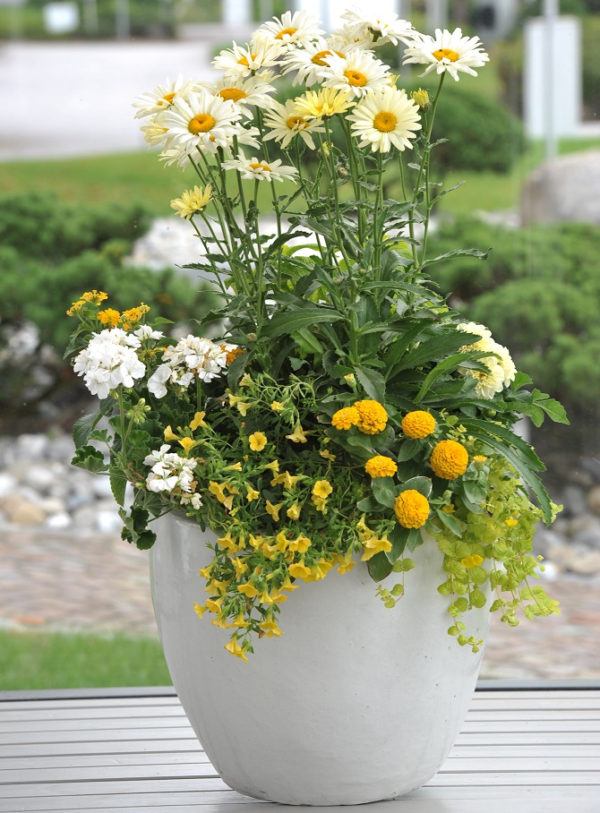 pflanzen f r den k bel richtig kombinieren gawina beet und balkonpflanzen k belbepflanzung. Black Bedroom Furniture Sets. Home Design Ideas