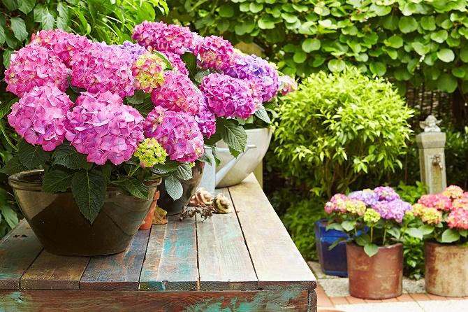 Bildunterschrift: Farbenpracht selbst im Schatten: Die kraftvollen Töne bringen sonnige bis schattige Plätze zum Leuchten. (Bildnachweis: GMH/FGJ)