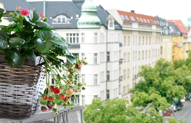 Bildunterschrift: Erdbeeren gedeihen gut auf dem Stadtbalkon und sehen zu-dem schön aus. (Bildnachweis: GMH/ Fridulin)