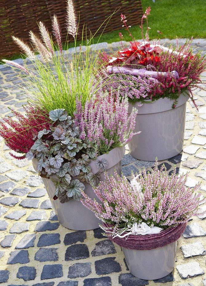 Bildunterschrift: Für eine stimmungsvolle Herbstbepflanzung sind Heidekräuter wegen ihrer haltbaren Blüten in warmen Farben die perfekte Wahl. (Bildnachweis: GMH/ Rudolf Schubert Fotografie)