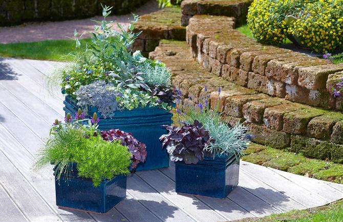 Bildunterschrift: Stimmig: Die Gruppe Kübel in Blau unterstreicht die Bepflan-zung aus blau-violetten Blüten und silbrigen Kräutern. Schöne Akzente setzen dunkle und frischgrüne Blattschmuckpflanzen. Kübel Hintergrund: Caryopteris 'Dark Knight', Carex 'Frosted Curls', -Ceratostigma plumbaginoides, Orostachys iwarenge, Salvia 'Purpurascens', -Ajuga 'Elmblut', Santolina chamaecyparissus, -Hedera 'William Kennedy' Kübel vorne: Scirpus, Sedum 'Green Bouquet', Heuchera 'Blackberry Jam', Prunella 'Blau' Kübel rechts: -Heuchera 'Midnight Rose', Helichrysum thianschanicum, -Lavandula 'Oxford Gem' (Bildnachweis: GMH/FGJ)