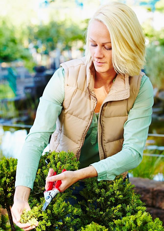 Bildunterschrift: Mit einer Gartenschere lassen sich kleinere Schnittar-beiten im Herbst problemlos durchführen. Auch für Linkshänder gibt es passende Modelle im gärtnerischen Fachhandel. (Bildnachweis: GMH/BVE)