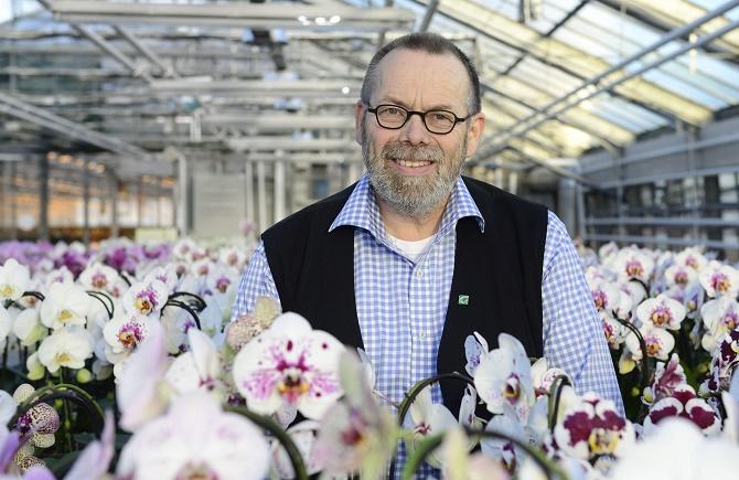 Bildunterschrift: Als Orchideen-Züchter arbeitet Matthias Bremkens in seinen Gewächshäusern am Niederrhein daran, dass es immer neue Phalaenopsis-Sorten mit noch schöneren Blüten gibt. (Bildnachweis: GMH)