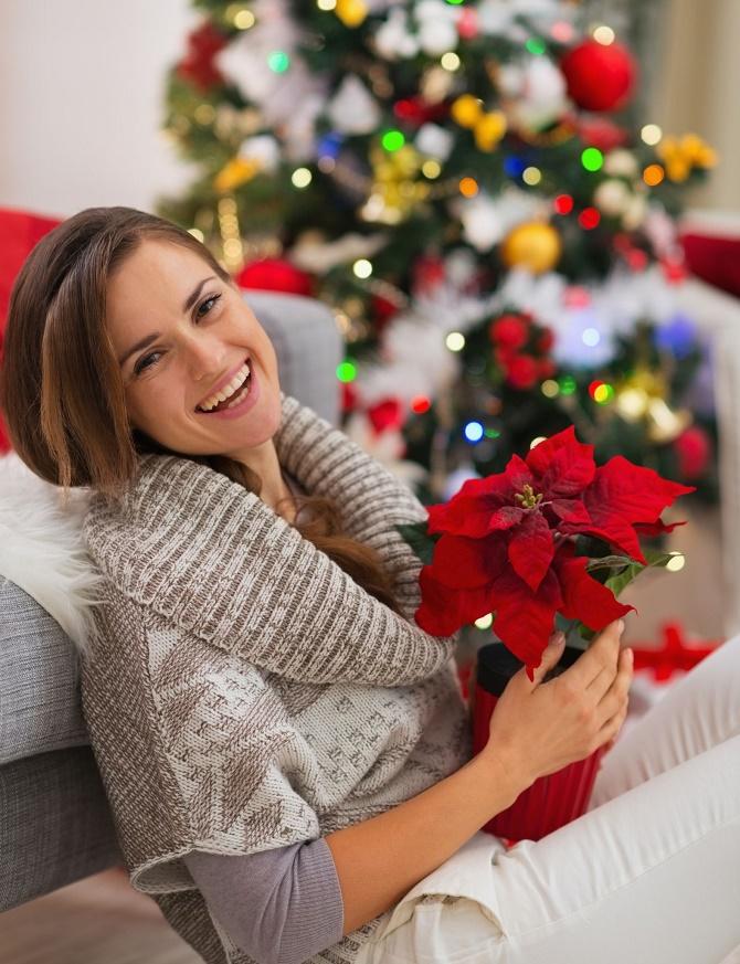 Bildunterschrift: In der Weihnachtszeit sorgt nicht nur ein prachtvoll ge-schmückter Christbaum für weihnachtlichen Glanz und natürlich schöne Au-genblicke. Auch winterblühende Pflanzen wie der Weihnachtsstern, der Weihnachtskaktus, die Amaryllis oder die Christrose können den Betrachter mit ihren prachtvollen Farben in festliche Stimmung versetzen.(Bildnachweis: GMH)