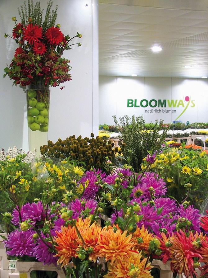 landgard_-bloomways_-paderborn