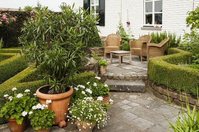 sch ne k belpflanzen verdienen einen platz an der sonne. Black Bedroom Furniture Sets. Home Design Ideas