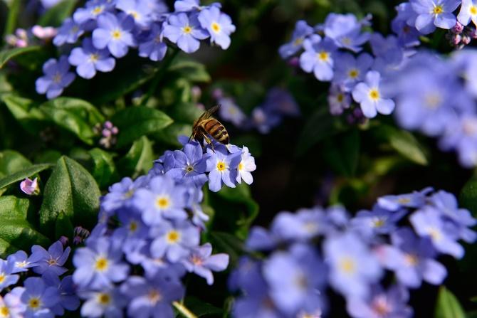 hilfe und unterst tzung f r unsere bienen gawina bienen f ttern bienen helfen bienenschutz. Black Bedroom Furniture Sets. Home Design Ideas