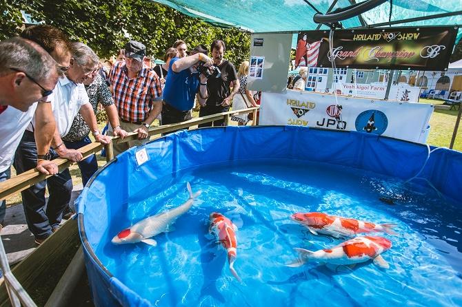 Die schlossg rten arcen laden zur koi show ein gawina for Japanische kampffische